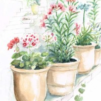 fleurs-pot-uzes1